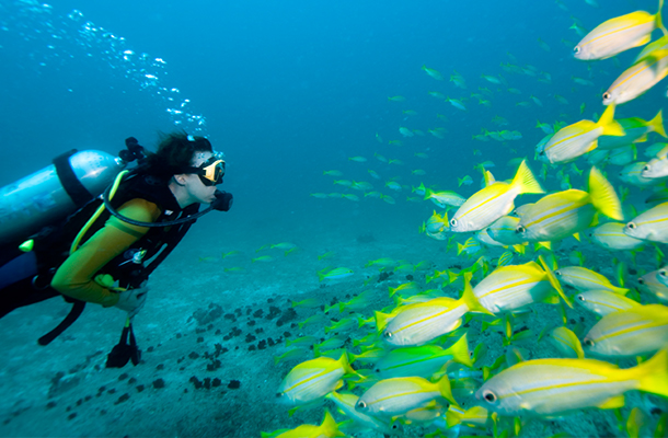 Scuba diving in Taganga