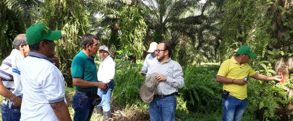 Fedepalma: facts about palm oil